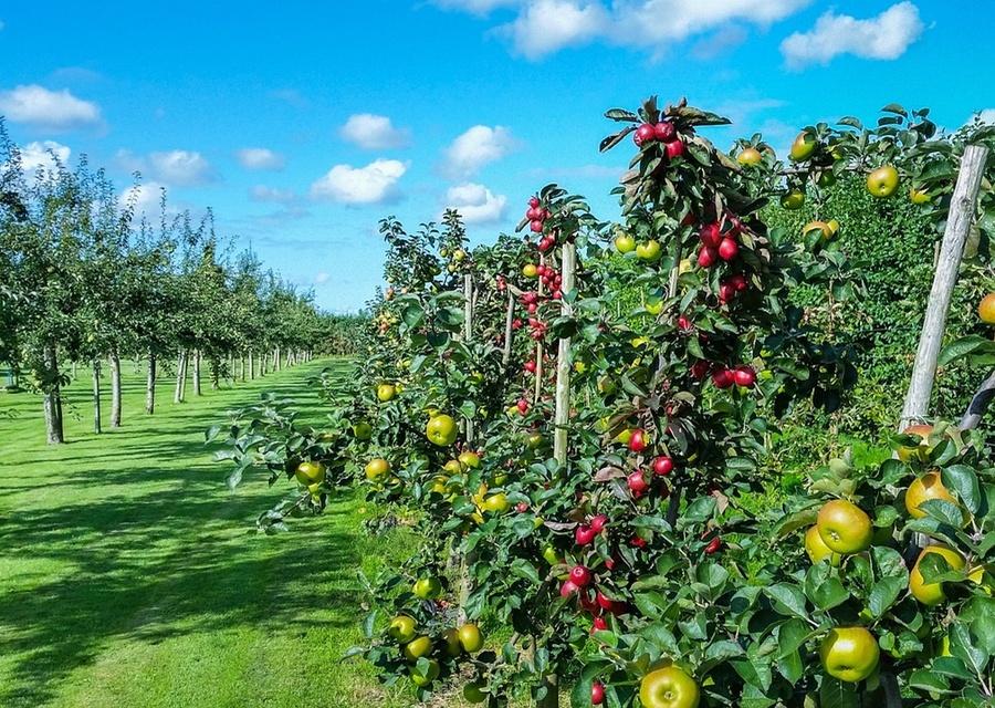 Instalação e recuperação de pomares, hortas e jardins