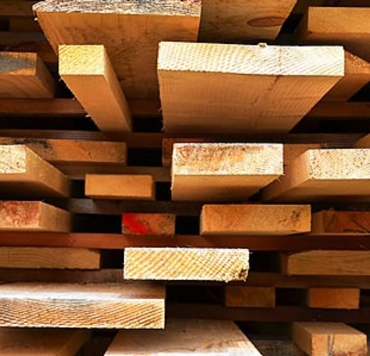 Small madeira amazonia shutterstock 1728x800 c