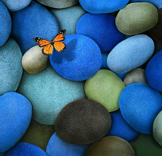 Small butterfly on stone