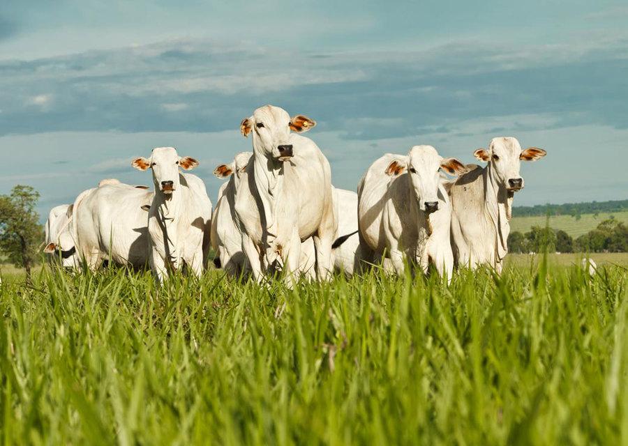 Assessoria e Gerenciamento em Produção Animal