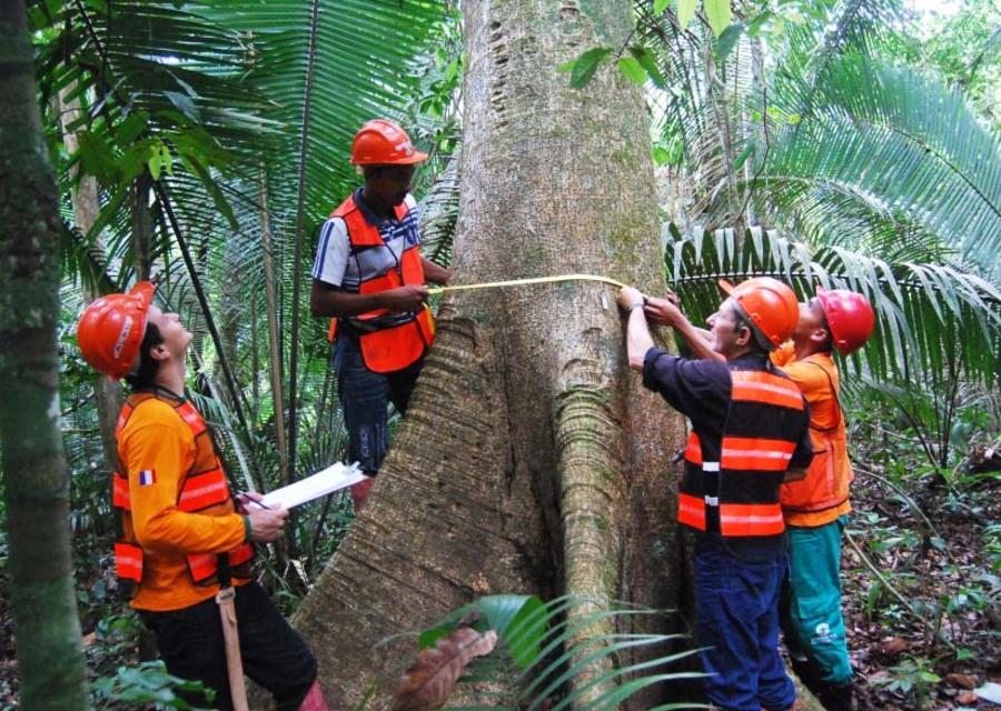 Manejo de Florestas Nativas e Exóticas