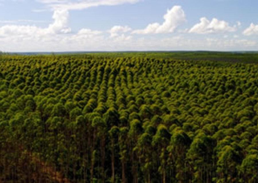 Projeto de Implantação Florestal