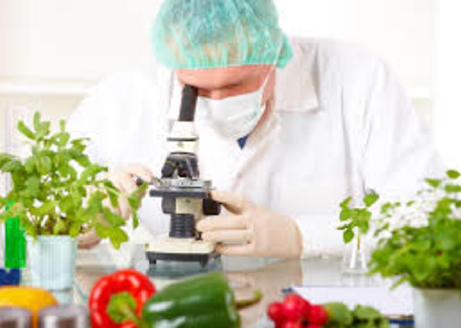 Desenvolvimento de Produtos (Alimentos)